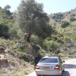 taxi_parked_under_olive_tree